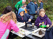 Pupils from Narberth School exploring pond life